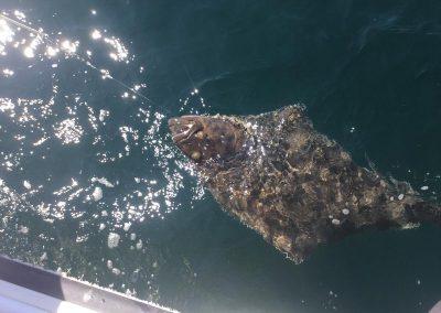 fishing-halibut